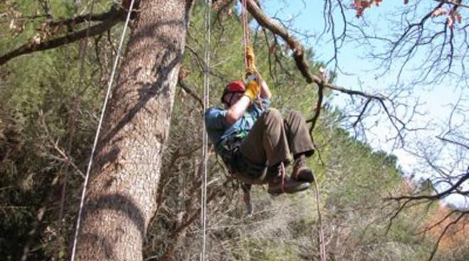 corso_tree_climbing_1