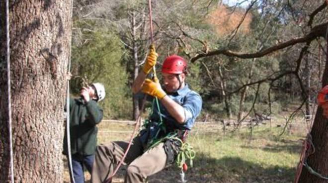 corso_tree_climbing