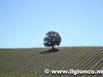 paesaggio_toscano_vigna_3mod