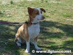 cane_generico_guinzagliomod
