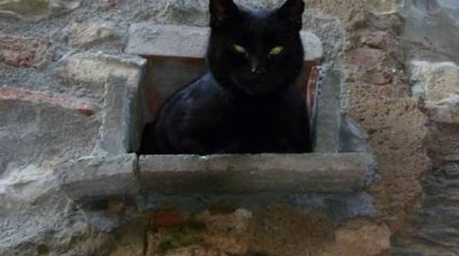 gatto randagio giuncarico