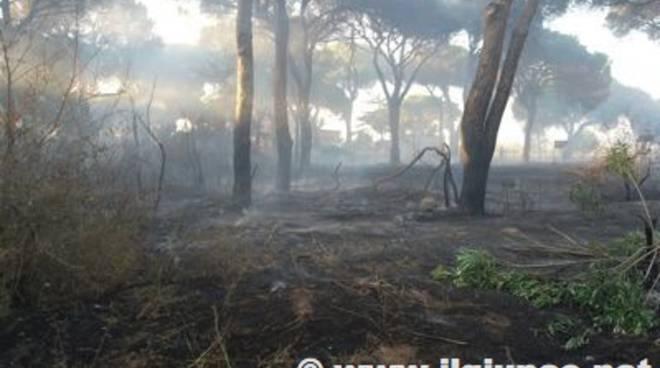 Incendio Pineta2