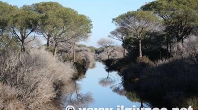 maremma_paesaggio_giunco_2012mod