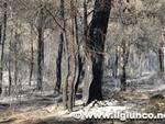 pineta bruciata1