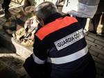 guardia_costiera_cigno