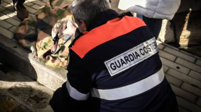 guardia_costiera_cigno