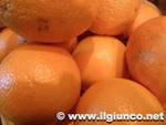 arance_frutta