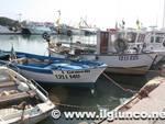 barche banchina diporto