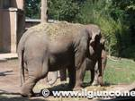 bioparco_elefante