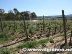 vigna_vigne_agricoltura