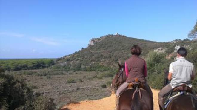 parco_maremma_cavallo