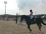 ippodromo_equitazione_cavallo