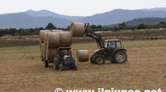 trattore campagna rotoballe