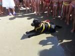 cani nuoto salvamento