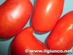 pomodori verdura