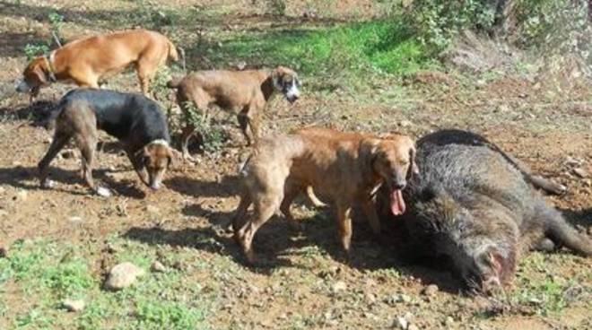 8 cani da caccia morti a castiglione la colpa della - Quando fare il primo bagno al cane ...