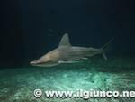 squalo_mare acquario