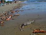 topo_spiaggia