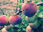 frutta grandine