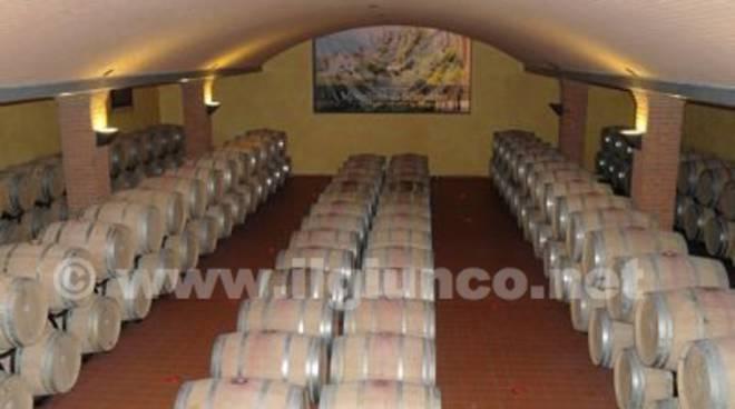 Botti vino Morellino di Scansano