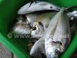 pesci pesca