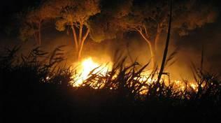 incendio pineta notte