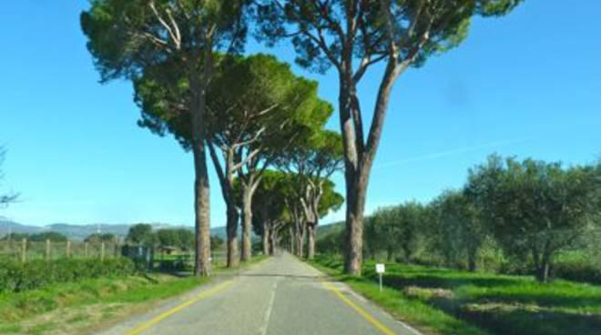 Sticciano-Roccastrada strada dei pini