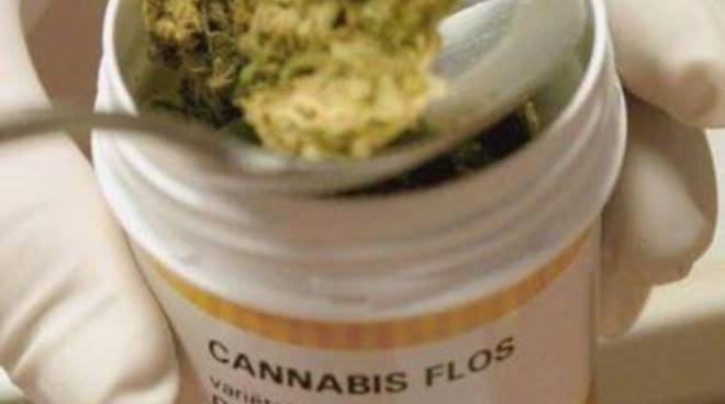 cannabis_2015
