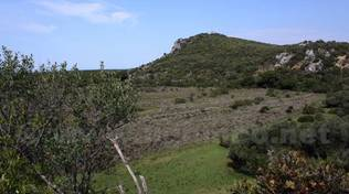 parco maremma uccellina 2015