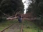 ferrovia bartolina abero