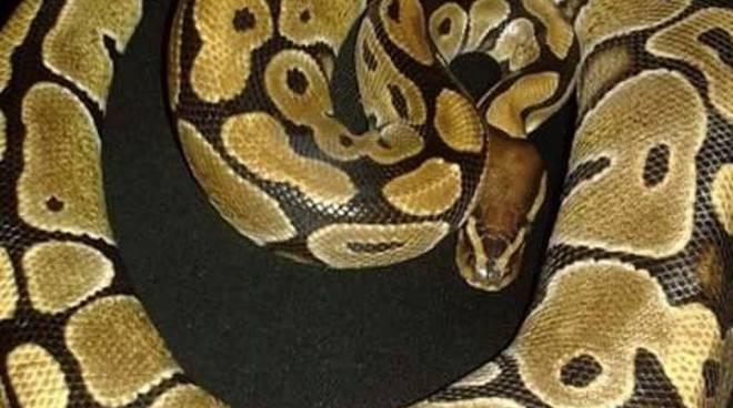 Reptilia il mondo dei serpenti in una mostra con rettili for Nomi di rettili