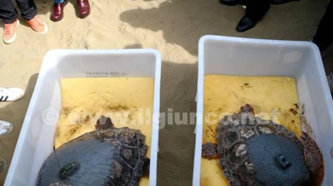 Oliva e ondina ritrovano la libert bagno di folla per le for Tartarughe di mare domestiche