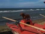 cane spiaggia