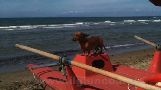 cane_spiaggia