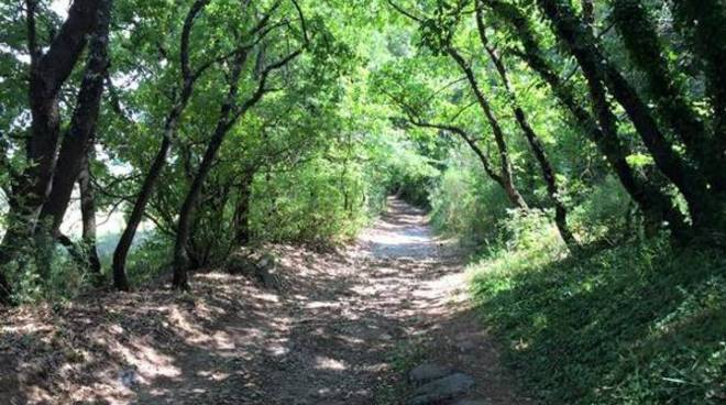 francigena bosco