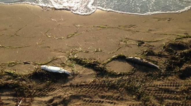 moria_pesci_spiaggia
