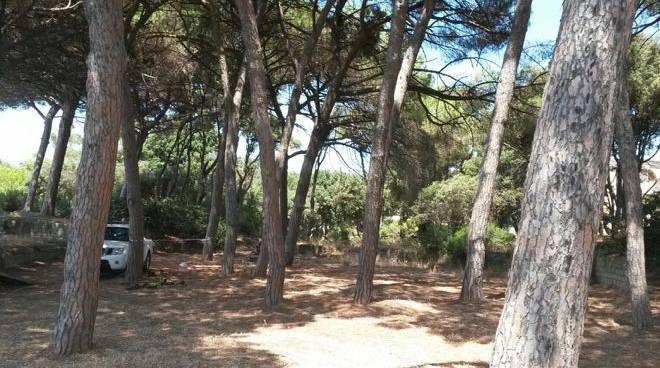 Al via i lavori di pulizia della pineta sul lungomare di follonica - Bagno pineta follonica ...