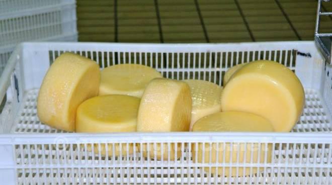 Caseificio Manciano formaggio