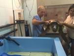 centro recupero tartarughe parco tartanet