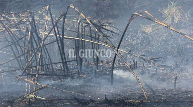 Incendio Grosseto Nord agosto 2015
