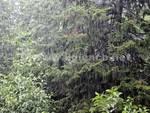 Pioggia alberi 2015