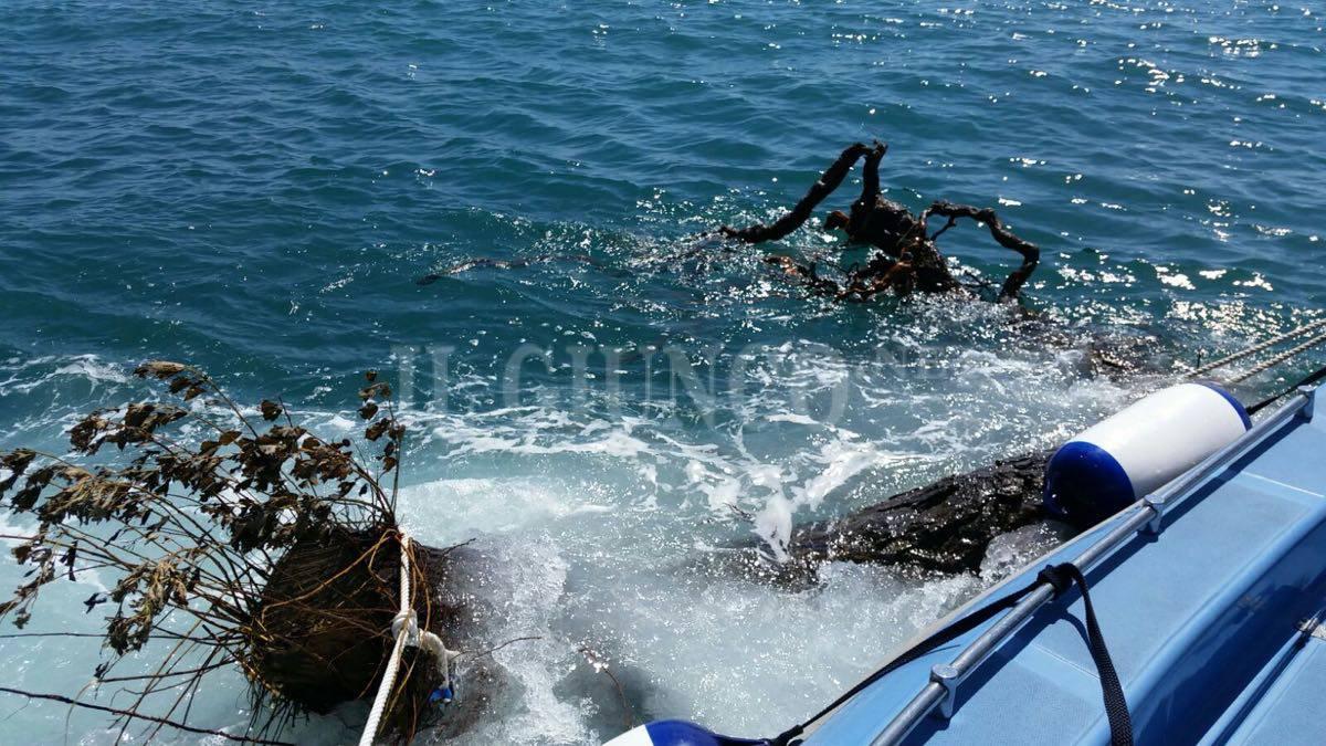 Recupero tronchi in mare Polizia