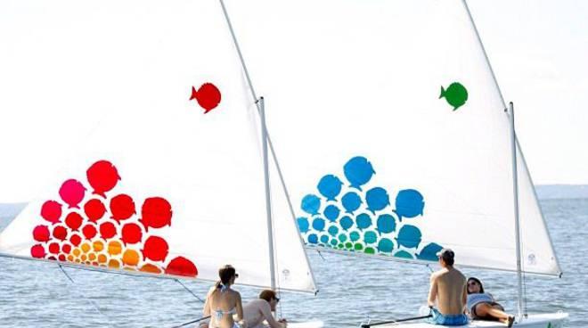 Sunfish vela