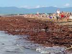Tronchi e rami sulla spiaggia di Marina