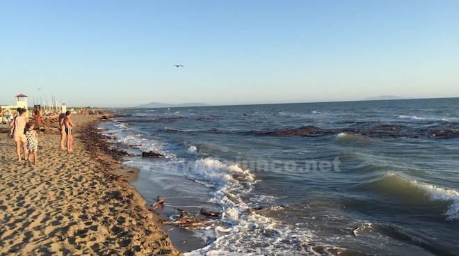 Tronchi spiaggia Marina di Grosseto II