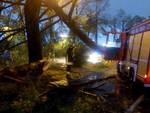 albero caduto vigili