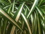 piante vivaismo florovivaismo