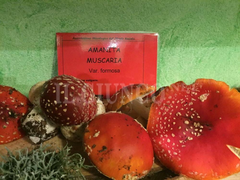 Mostra micologica Bagnolo 2015