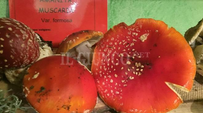 funghi velenosi Mostra micologica Bagnolo 2015