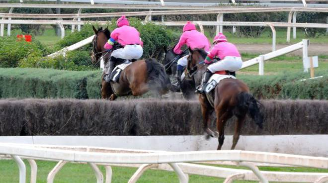 Casalone cavalli ostacoli